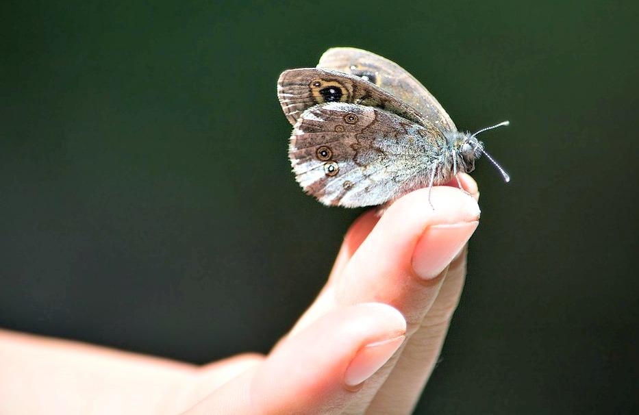 Butterfly on finger tip